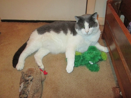 Gizmo with a toy frog and a toy snake coming after him