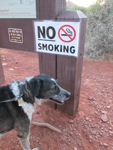 Bongo near a No Smoking sign