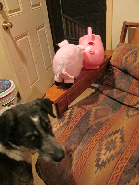 toy pigs on the futon arm near the open door