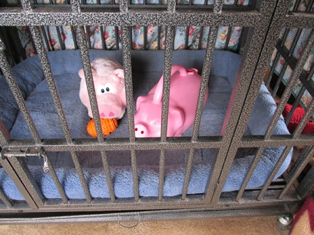 Toy pigs in Bongo's dog jail
