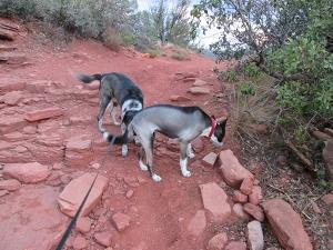 Bongo and Lucy