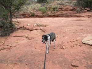 Bongo on his trail refusing to budge
