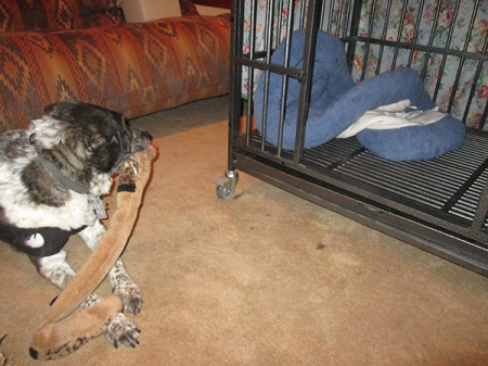 Bongo with his toy snake near his dog jail