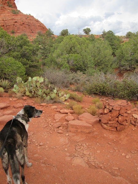 Bongo looking at more thunder clouds behind Sedona red rocks