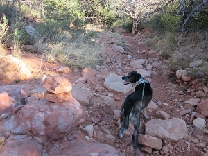 Bongo looking back at a rock stack on the trail