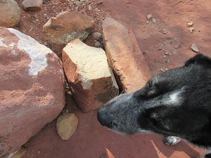 Bongo by a broken rock