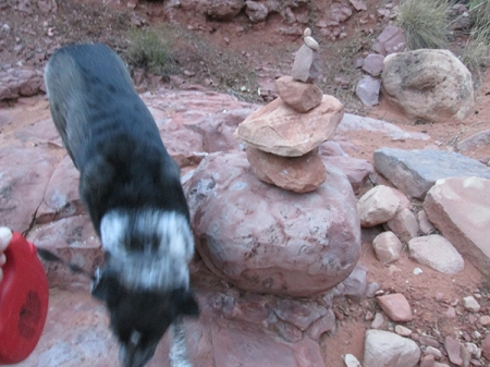 Bongo next to a stack of rocks