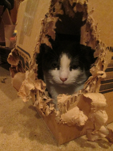 Gizmo in a box that he's torn to corner out of