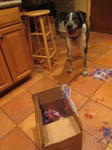 Bongo and the box