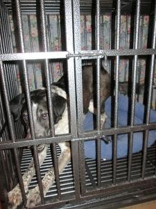 Bongo wanting out of dog jail