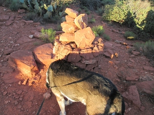 Bongo sniffing a stack of rocks on the trail