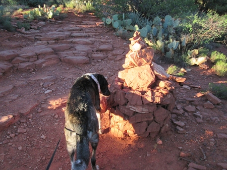 Bongo sniffing a taller stack of rocks on the trail