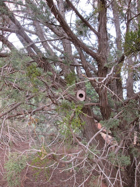 Bird house in a juniper tree