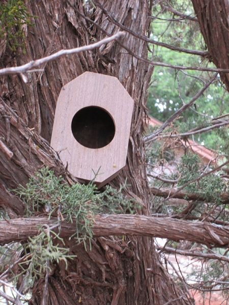 Bird house on tree trunk