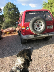 Bongo looking at a vehicle with a paw print and a climbing school sign