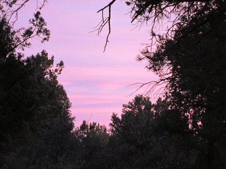 Pink and purple sunset sky