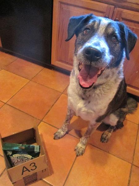Bongo happily sitting near a box