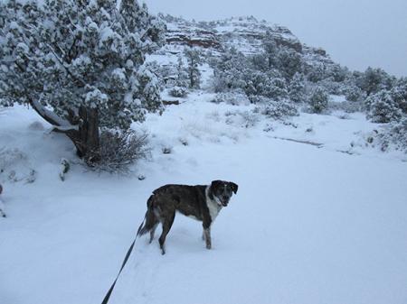 Bongo standing in the snow
