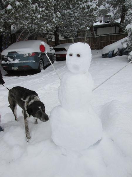 Bongo sniffing a snowman