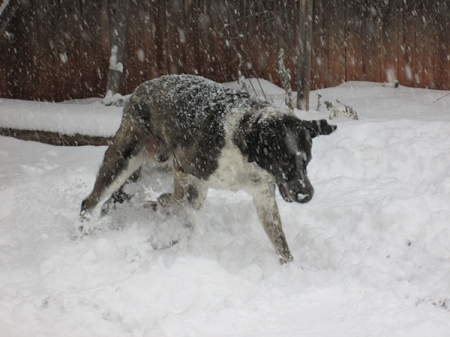 Bongo playing in the snow
