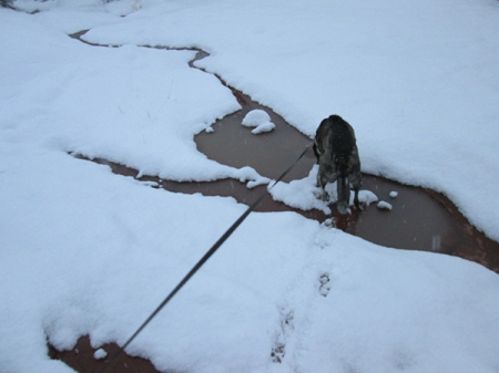 Bongo in his puddle that is almost covered in snow