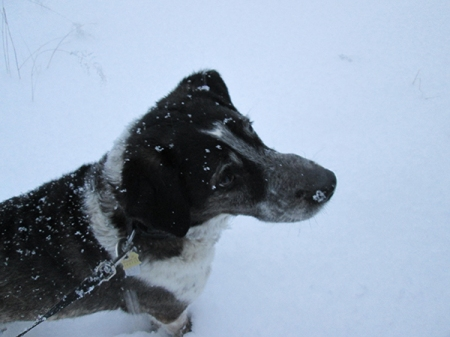 Bongo in the snow with a sad look