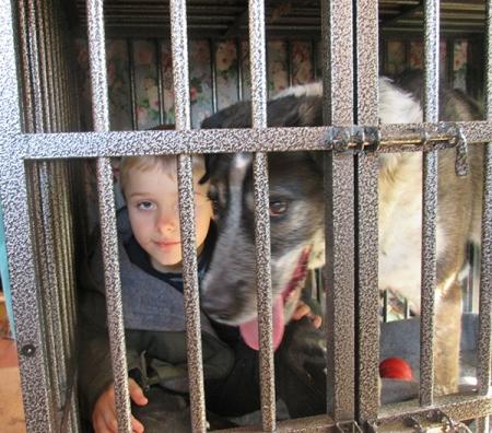 Bongo and his buddy both locked in dog jail