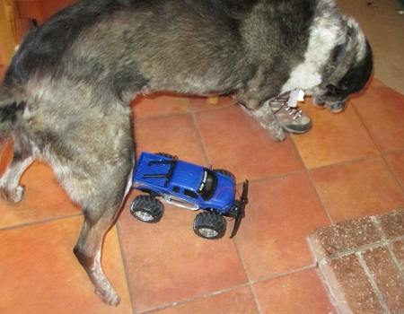 Bongo jumping over a remote control truck
