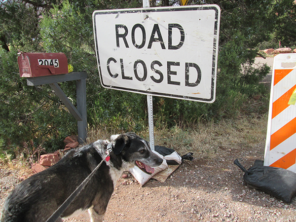 Bongo and a Road Closed sign