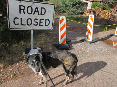 Bongo and Road Closed sign a trailhead