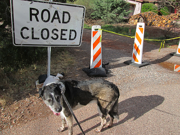 Bongo and Road Closed sign a trailhead