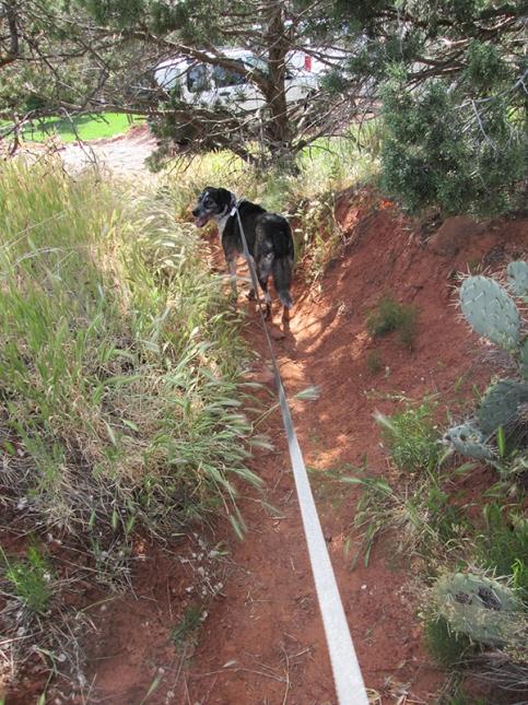 Bongo on the secret trail